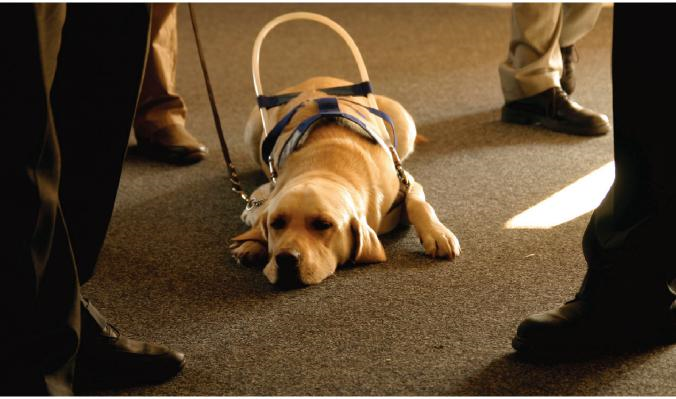 Service Animals And Emotional Support Animals Ada